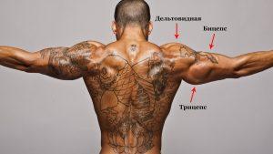 Мышечные группы руки