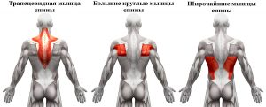 Мышечные группы спины