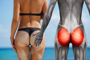 Ягодичная мускулатура